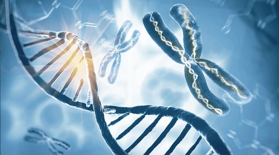 kromoszomak